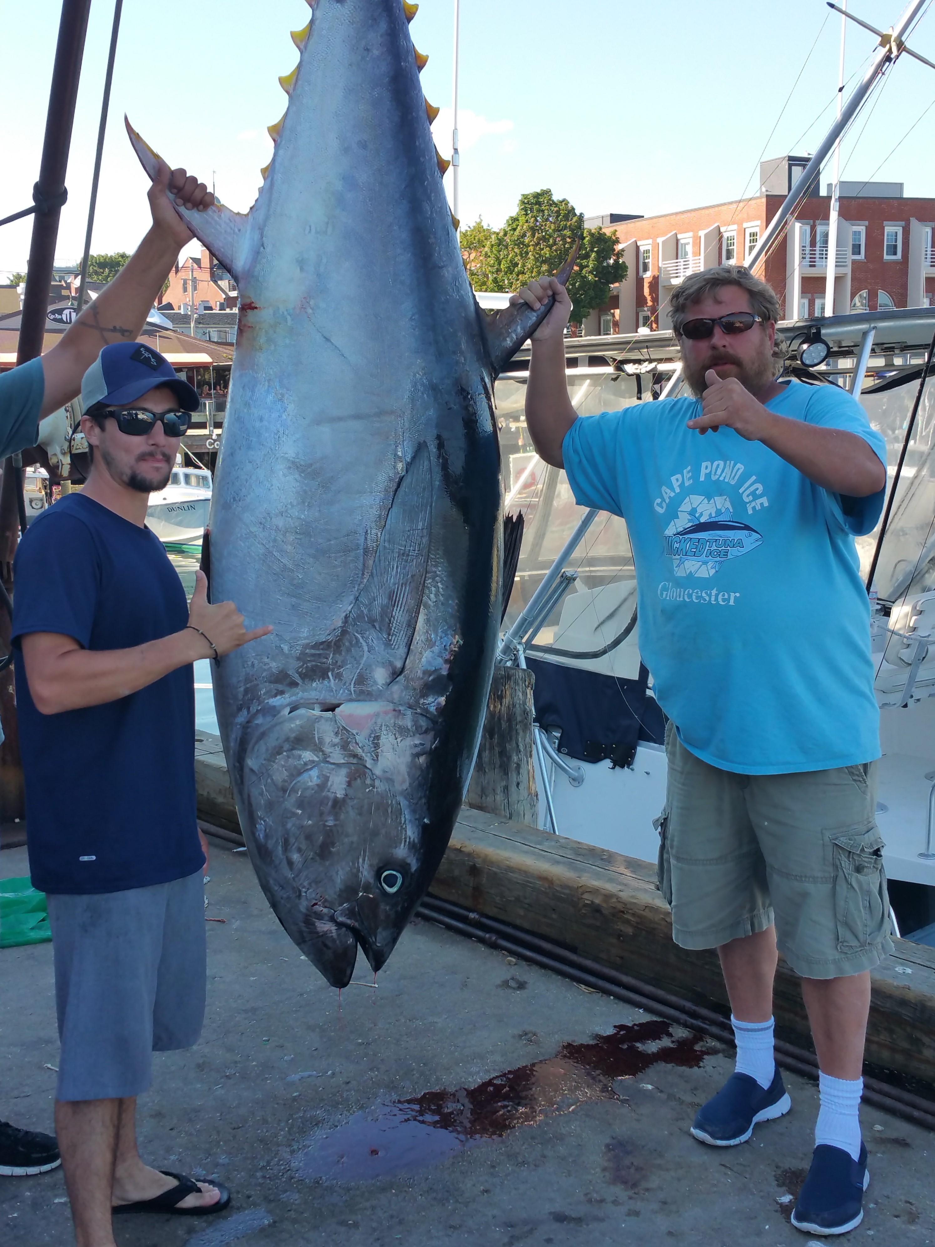 Photo Gallery - Best Gloucester Bluefin Tuna Charters